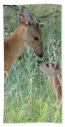 Young White-tailed Deer Say Hello Beach Towel