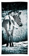 Zebra Blues  Beach Towel