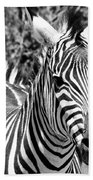 zebra Family Beach Towel