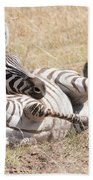 Zebra Foal Rolls In Dust On Savannah Beach Towel