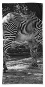 Zebra In Black And White Beach Towel