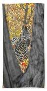 Zebra In Mopane Textures Beach Towel