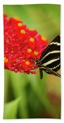 Zebra Long Wing Butterfly Beach Towel