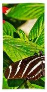 Zebra Longwing Butterfly In Living Desert Zoo And Gardens In Palm Desert-california  Beach Towel