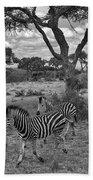 Zebra Running Through Savannah Beach Towel