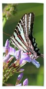 Zebra Swallowtail Butterfly On Phlox Beach Towel