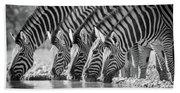Zebras Drinking Beach Sheet