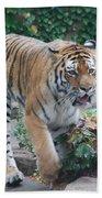 Chicago Zoo Tiger Beach Towel