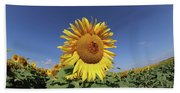 Bee On Blooming Sunflower Beach Towel