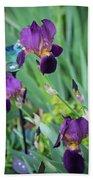 Iris In The Cottage Garden Beach Towel