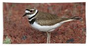 Killdeer Beach Sheet