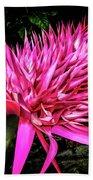 Pink Princess Bromeliad Beach Towel