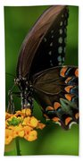 Spicebush Swallowtail On Lantana Blooms Beach Towel