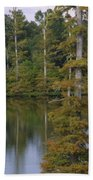 Tennesse Cypress In Wetland  Beach Towel