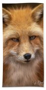 Russian Red Fox Beach Towel