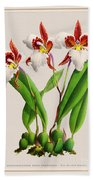 Orchid Vintage Print On Tinted Paperboard Beach Towel