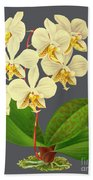 Orchid Old Print Beach Sheet