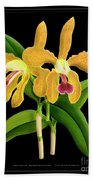 Vintage Orchid Print On Black Paperboard Beach Towel