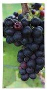 Purple Grape Bunches 17 Beach Towel