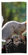 Squirrel Friend Beach Towel