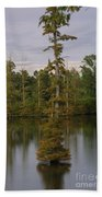 Tennesse Cypress In Wetland  Beach Towel