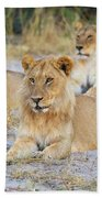 3 Lions Beach Towel by John Rodrigues