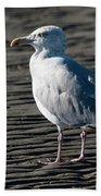 Seagull On Beach Beach Towel