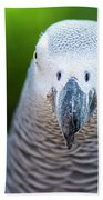 African Grey Parrot Beach Towel by Rob D Imagery