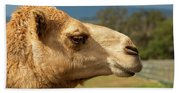 Camel Out Amongst Nature Beach Towel