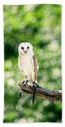Beautiful Barn Owl Beach Towel by Rob D Imagery