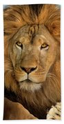 656250006 African Lion Panthera Leo Wildlife Rescue Beach Towel by Dave Welling