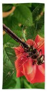 Dragonfly On A Flower Of A Red Rose. Macro Photo Beach Towel