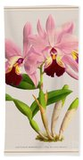 Orchid Vintage Print On Colored Paperboard Beach Towel