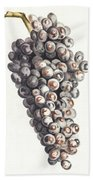 A Bunch Of Grapes By Johan Teyler  1648-1709  Beach Towel