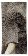 African Elephant Beach Towel by Alan M Hunt