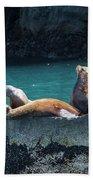 Alaska Steller Sea Lions Beach Towel