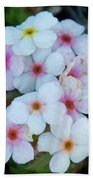 Alpine Rockjasmine Up Close Beach Towel