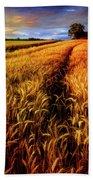 Amber Waves Of Grain Painting  Beach Sheet