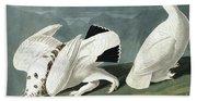 American Ptarmigan, Tetrao Mutus, White Tailed Grous, Tetrao Leucurus Beach Towel