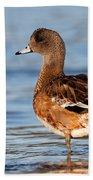 American Wigeon Standing Alert Beach Towel by Sue Harper