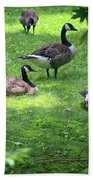 An Afternoon With Canada Geese Beach Towel