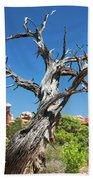 Ancient Dead Juniper With Character Beach Towel