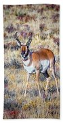 Antelope Buck 2 Beach Towel