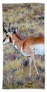 Antelope Buck Beach Towel