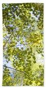 Aspen Canopy With Sun Flare Beach Sheet