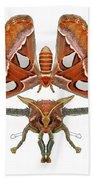 Atlas Moth5 Beach Towel