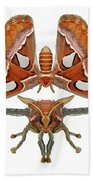 Atlas Moth7 Beach Towel