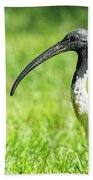 Australian White Ibis Beach Towel by Rob D Imagery