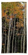 Autumn As The Seasons Change Beach Towel