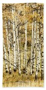 Autumn Aspen Beach Towel by Brad Allen Fine Art